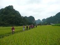 Balade au coeur des rizieres