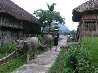 Dans le village des ethnies