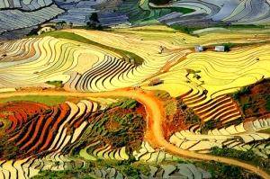 Les rizières en gradins de Sapa
