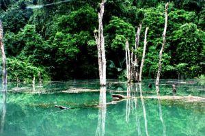 parc-national-de-cuc-phuong