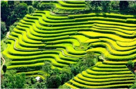 rizieres-en-terrasse-du-Nord 1