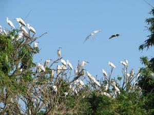 L'ile-des-herons