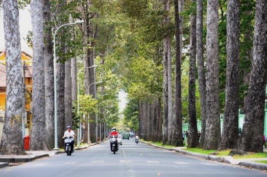 Des arbres séculaires au long de la rue Nguyen Binh Khiem, District 1 de Ho Chi Minh ville