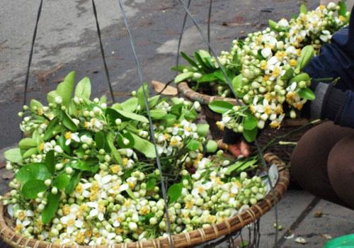 fleurs pamplemoussier