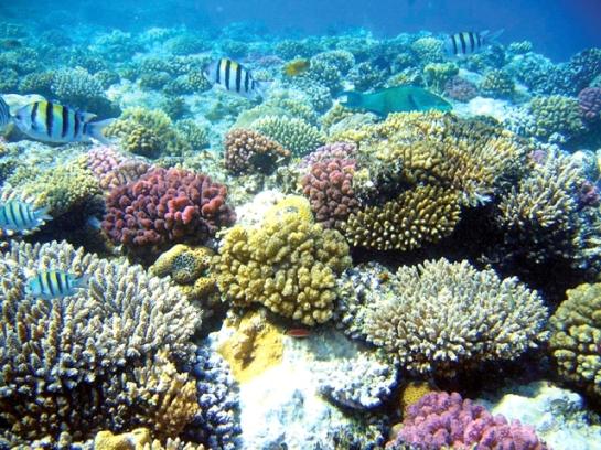 Con dao plongee coraux