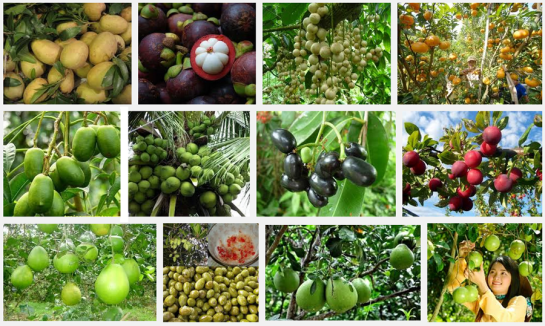 vietnam fruit tropical.png