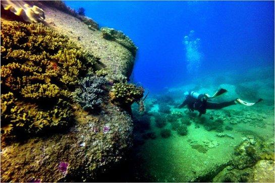 coraux Cu Lao Cau