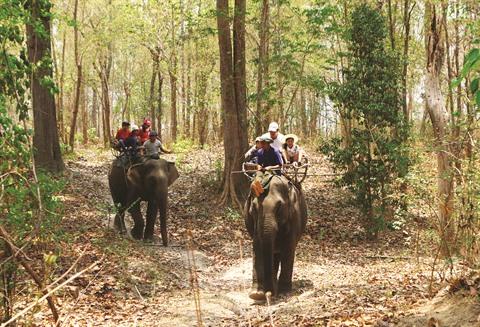 balade a dos elephant 1