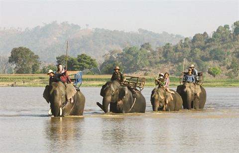 balade a dos elephant 2