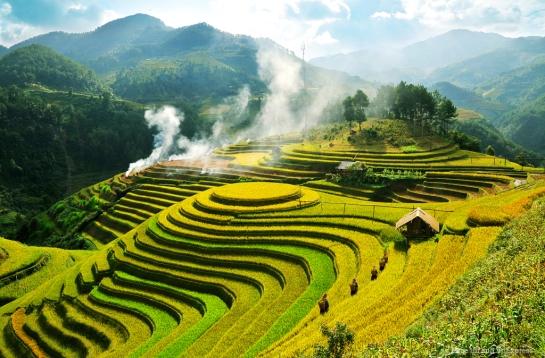 riziere en terrasse mu cang chai