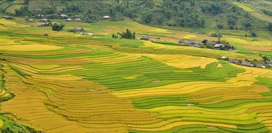 le champ muong lo