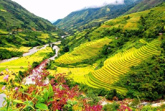 vallée muong hoa sapa.jpg