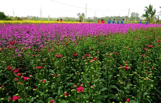 hai phong village de fleurs